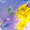 終了しました!4月8日★無料★カリスマシャーマンによる「魂の覚醒」一斉ヒーリング開催♪の画像