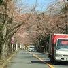 3月31日 朝のソメイヨシノの画像