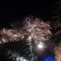 ❀舞鶴公園の夜桜❀