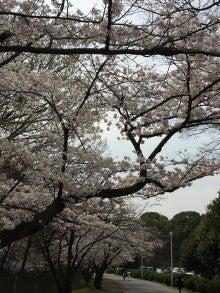 緑地公園 桜 新築分譲マンション 豊中市