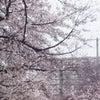 4月(今月)の運勢占い 「象数学☆アクティブナンバーで占う今月の運勢」の画像