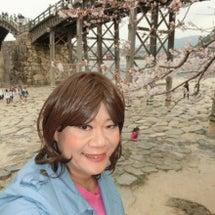 桜-錦帯橋-七分咲き