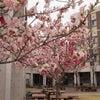 3月31日、晴れ(そろそろ桜満開)。の画像