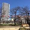 錦糸公園 桜情報!の画像