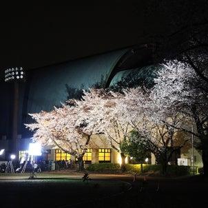 夜桜で歌うDグループの画像