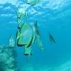 青の洞窟ダイビング、青の洞窟シュノーケル♪春休み・卒業旅行の予約も沖縄満喫テイクダイブでOK!!の画像