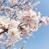 今日は歯列矯正の日    日本三大庭園 兼六園の画像