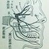 三叉神経痛・・・虫歯が原因の場合もある、激烈に痛い顔の神経痛の画像