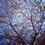 さくら…桜…サクラ