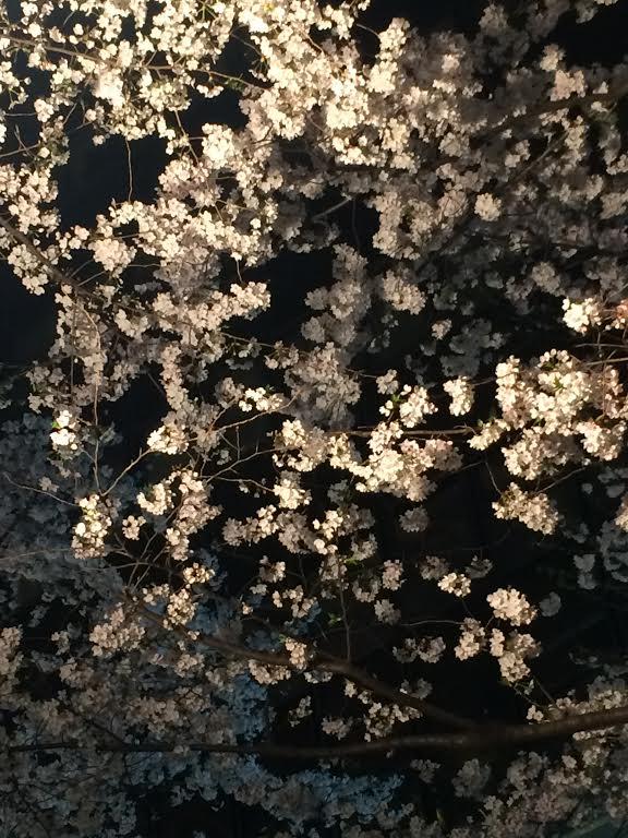桜 渋谷桜丘