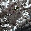 桜まつりなどの画像