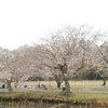 ガヤガヤ☆カミスガ❗春爛漫。の画像