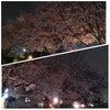 お花見JOG☆夜桜ver. ★*゚*(綺´∀`麗)*゚*★の画像