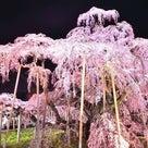 桜 満開ですね〜の記事より