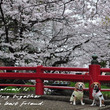 お花見散歩*:..。…
