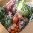 今週の季節野菜セット