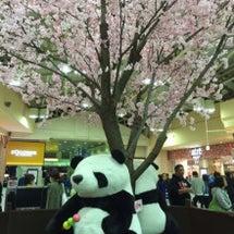 桜はゆっくり見れず(…