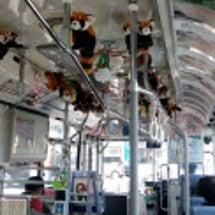 福岡市動物園レッサー…