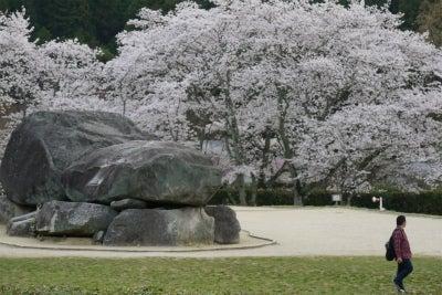 石舞台古墳の桜