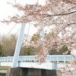 残り1枠♪桜フォト撮…