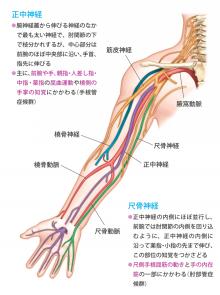 の が 腕 痛い 筋 二の腕が痛い:医師が考える原因と対処法 症状辞典
