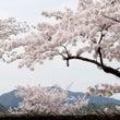 京都嵐山におでかけ~…