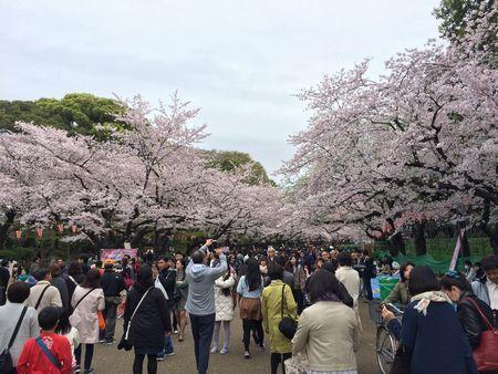 上野公園桜8