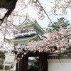 大野城7(桜満開)の画像