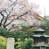 春HARU♪の画像