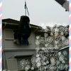 空飛ぶ相棒~~ヽ(*´∀`)ノの画像