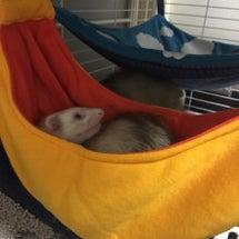 フェレットの寝床!バ…