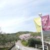 小豆島 オリーブ公園 でまったり時間を過ごす♡の画像