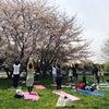 *お花見ヨガピラ開催〜の画像