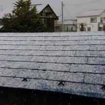 久しぶりの降雪