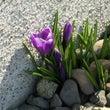 北海道春の気配も一休…