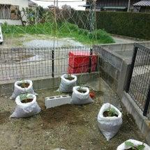 家庭菜園~