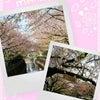 桜のためいき…の画像