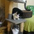 猫タワーワー3階立て