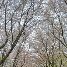春ですね♫