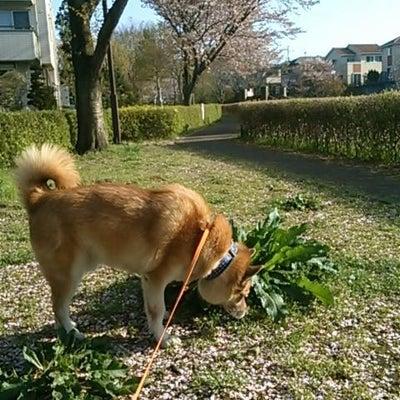 「春」は「デトックスの季節」の記事に添付されている画像