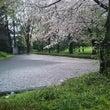 桜  散る
