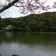 名残りの桜にこころ開…