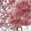 東北にも春が来ました…