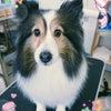 今日のお客様(*^▽^*)の画像