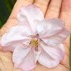 蛇松さまの桜の画像