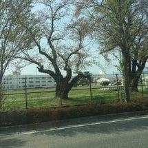 松本駐屯地自衛隊祭り…