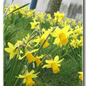 出張花教室、春のお試しワークショップで生徒さんも春満喫♪の画像
