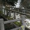 長滝橋と桜の画像