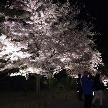 東寺の桜ララ〜♪