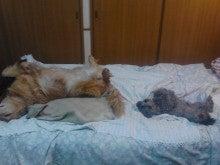 寝姿相似形